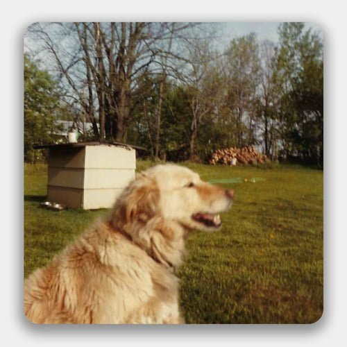 an old photo of a dog in a backyard