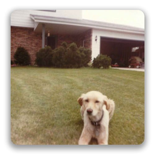 an old photo of a dog in a yard
